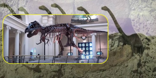 Fosil Dinosour