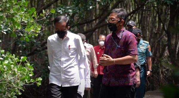 Jokowi Kunjungan Mangrove Bali